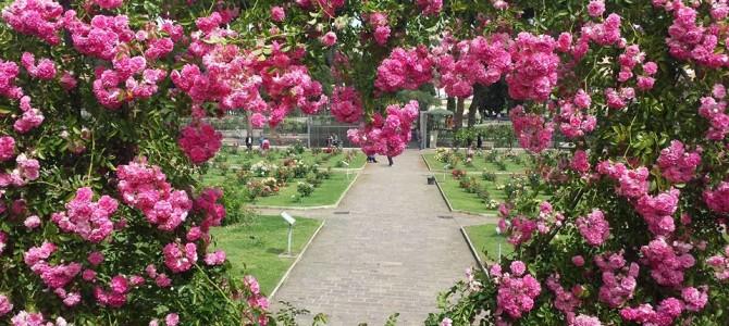 10 motivos para visitar Roma na primavera