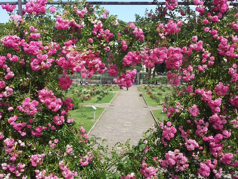 Primavera em Roma - Jardim de Rosas de Roma - Roseto