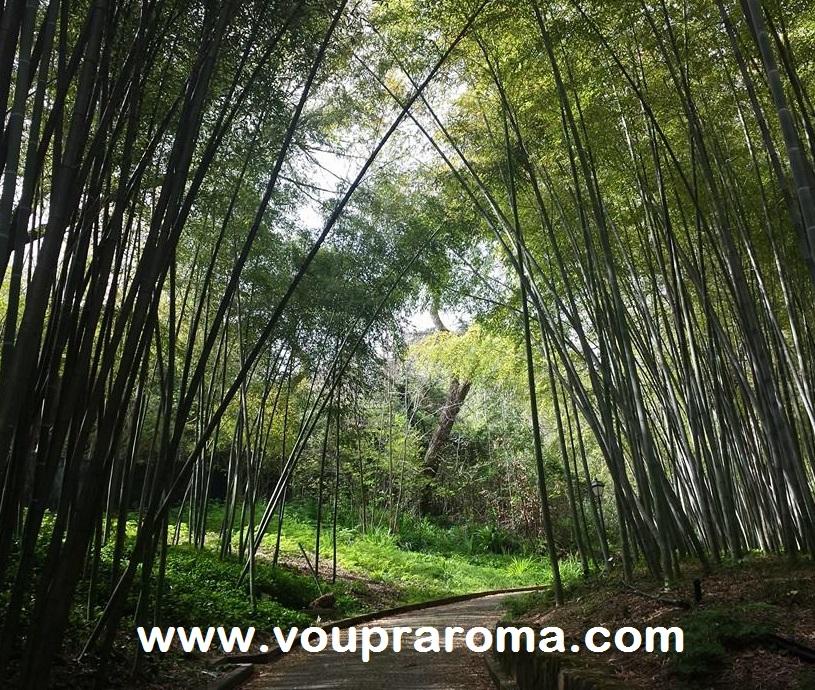 JARDIM BOTANICO ROMA - coleção Bambu - foto Ana Venticinque