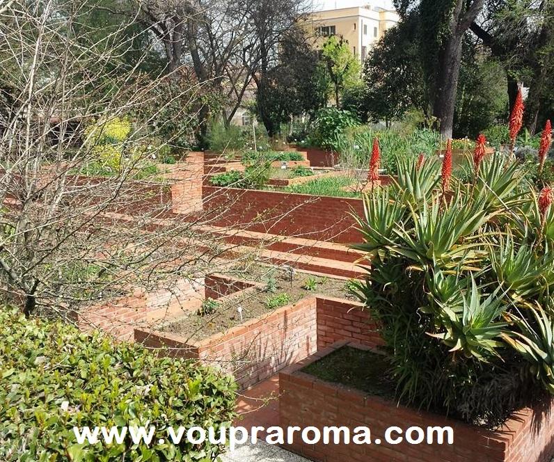 JARDIM BOTANICO ROMA - coleção das ervas medicinais - foto Ana Venticinque