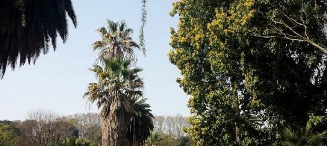 O Jardim Botânico de Roma está no Trastevere!