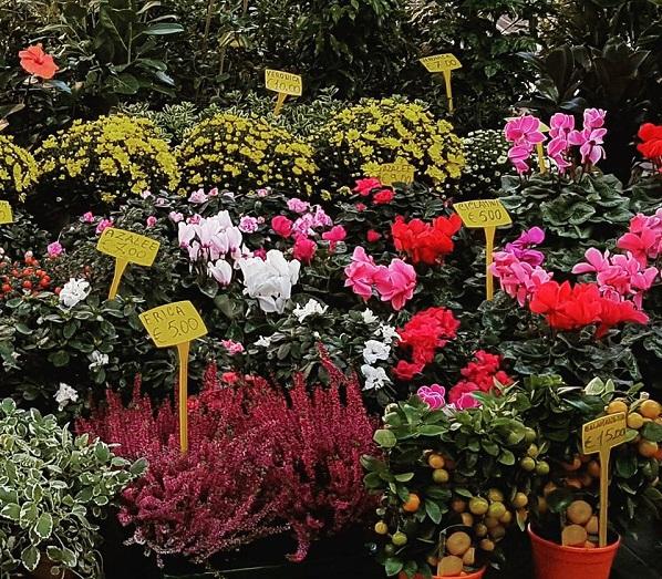 Flores no Mercado em Roma - Blog VoupraRoma