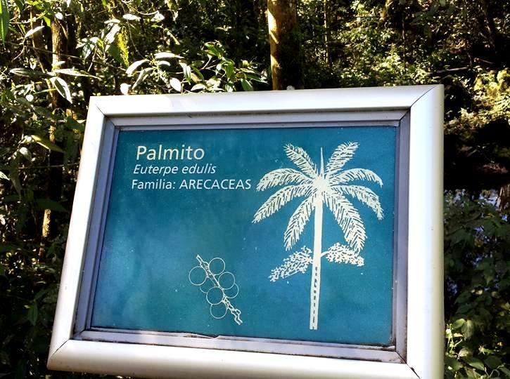 Palmito-Parque-Nacional-do-Iguaçu