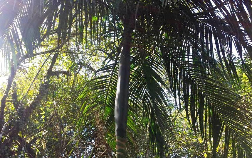 passeio-macuco-safari-palmito